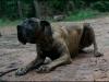 hunde_5631-2