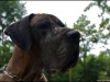 hunde_5631-3