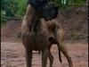 hunde_5631-4