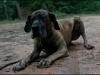 hunde_5631-6