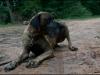 hunde_5631-7