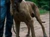 hunde_5631
