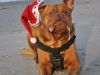 weihnachtsbild_missglueckt_185