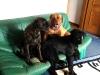 eine_couch_fuer_alle2_158