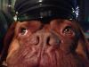 machito-police-dog