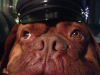 machito-police-dog